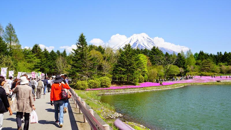 富士芝桜まつり 写真1
