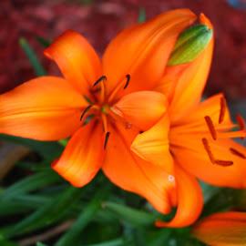 by Randi Landers - Flowers Flower Gardens (  )