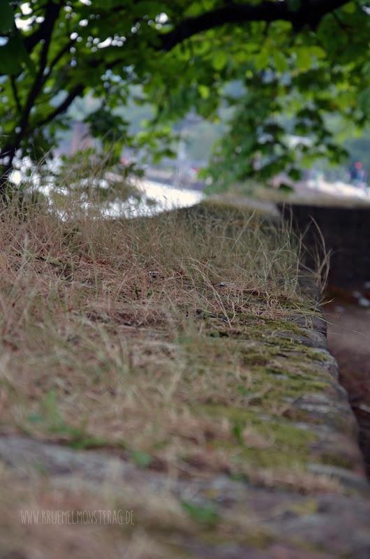 cam underfoot (01)