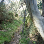 Gums lining the track (278297)