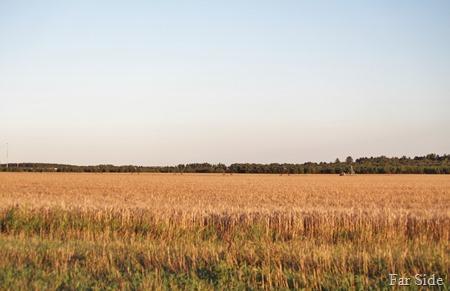 Small Grain Field