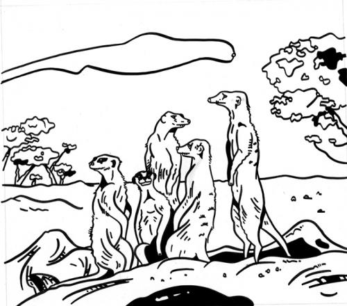 03-suricatos-or.jpg
