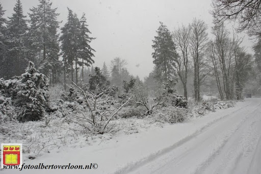 eerste sneeuwval in overloon 07-12-2012  (26).JPG