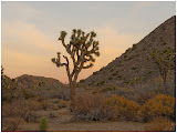 """Joshua Tree at Dawn"" by Dan Hudgings - 2nd place A General"