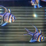 Downtown Aquarium - 116_3922.JPG