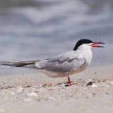 Audubon Spring Trip 2014