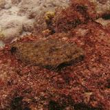 Bonaire 2011 - PICT0228.JPG