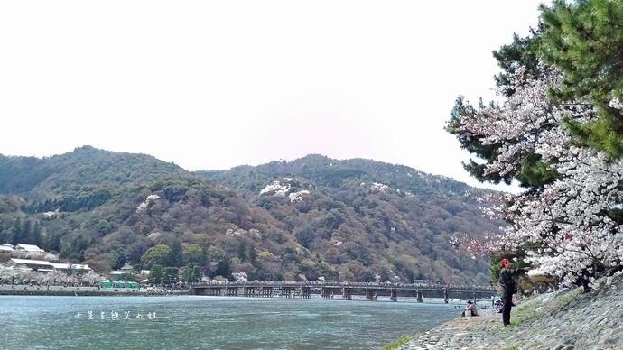 4 京都 嵐山渡月橋 賞櫻 櫻花 Saga Par 五色霜淇淋 彩色霜淇淋