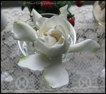 04-21-gardenia1