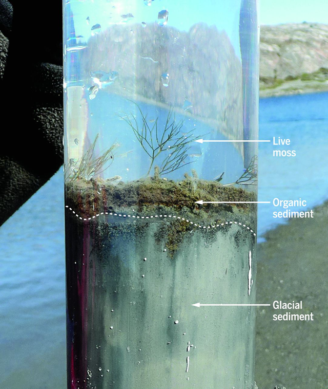 Indicators of the Anthropocene in recent lake sediments differ markedly from Holocene signatures. These include unprecedented combinations of plastics, fly ash, radionuclides, metals, pesticides, reactive nitrogen, and consequences of increasing greenhouse gas concentrations. In this sediment core from west Greenland (69˚03'N, 49˚54'W), glacier retreat due to climate warming has resulted in an abrupt stratigraphic transition from proglacial sediments to nonglacial organic matter, effectively demarcating the onset of the Anthropocene. Photo by J. P. Briner. Graphic: Waters, et al., 2016 / Science