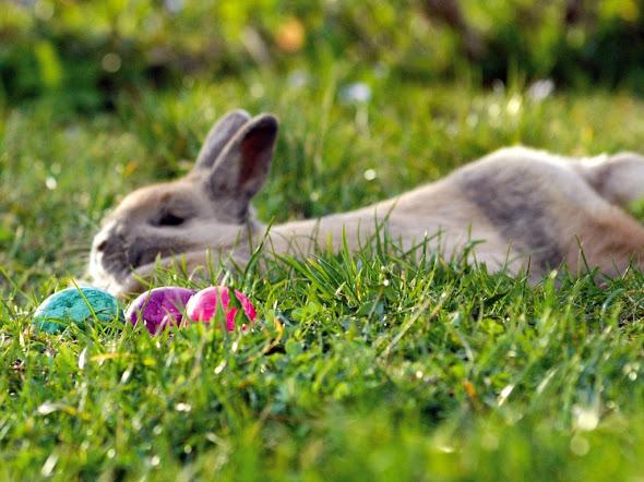 ... Easter, čestitka za Uskrs - download besplatna pozadina za desktop