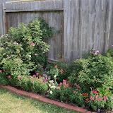 Gardening 2011 - 100_8498.JPG