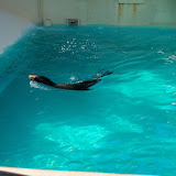 Houston Zoo - 116_8382.JPG