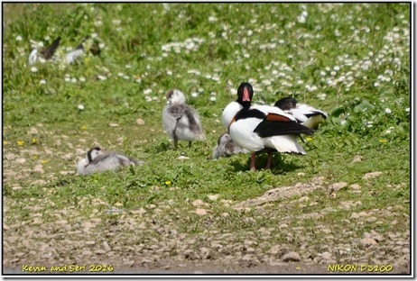 Slimbridge WWT - June