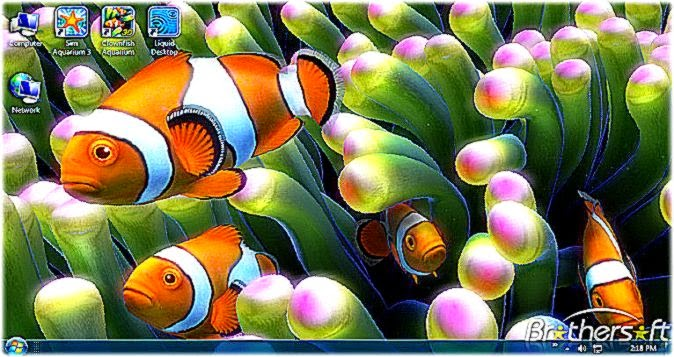 Download Free Clownfish Aquarium Live Wallpaper Clownfish