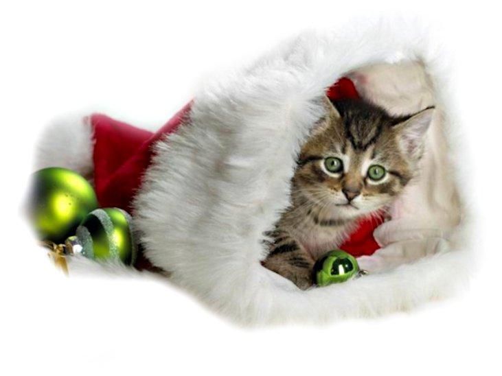 gato com acessórios de natal