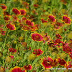 05-26-11 Arbor Hills Nature Preserve
