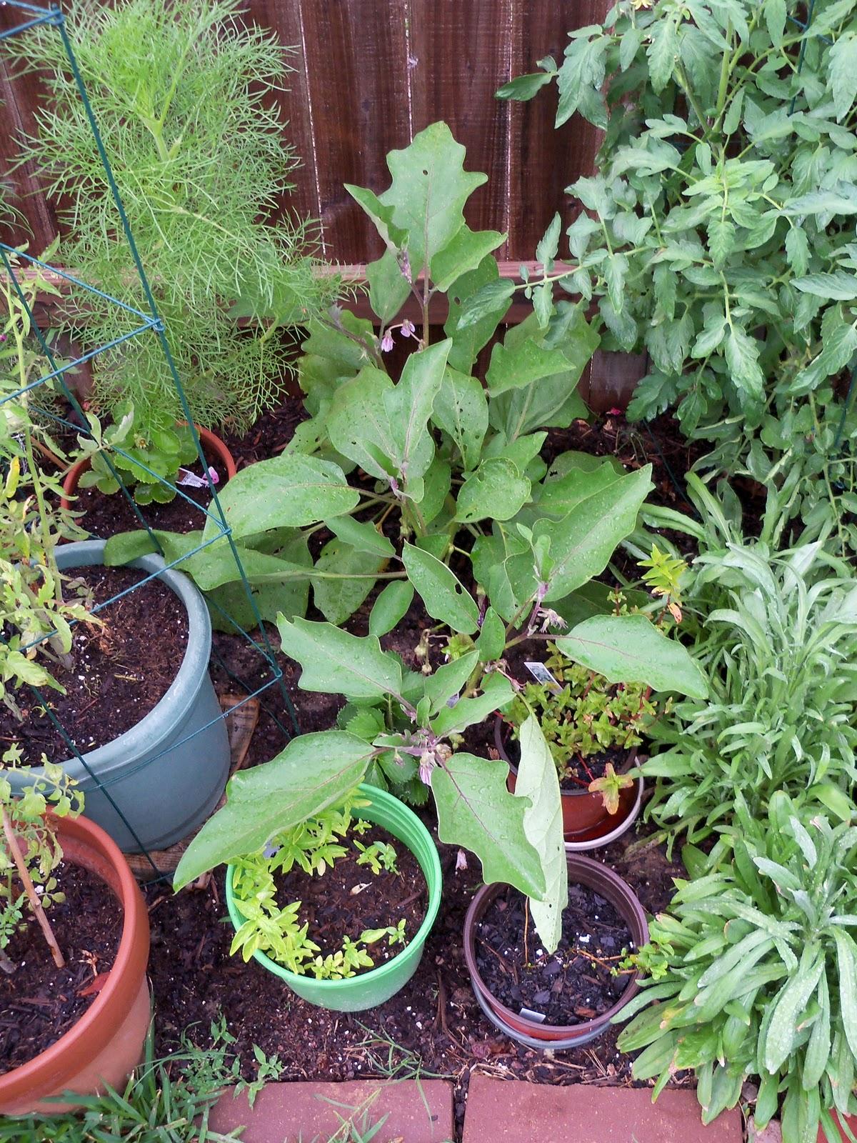 Gardening 2010, Part Two - 101_3196.JPG