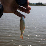 20150725_Fishing_Bochanytsia_060.jpg