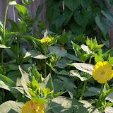 Gardening 2011 - 100_7785.JPG