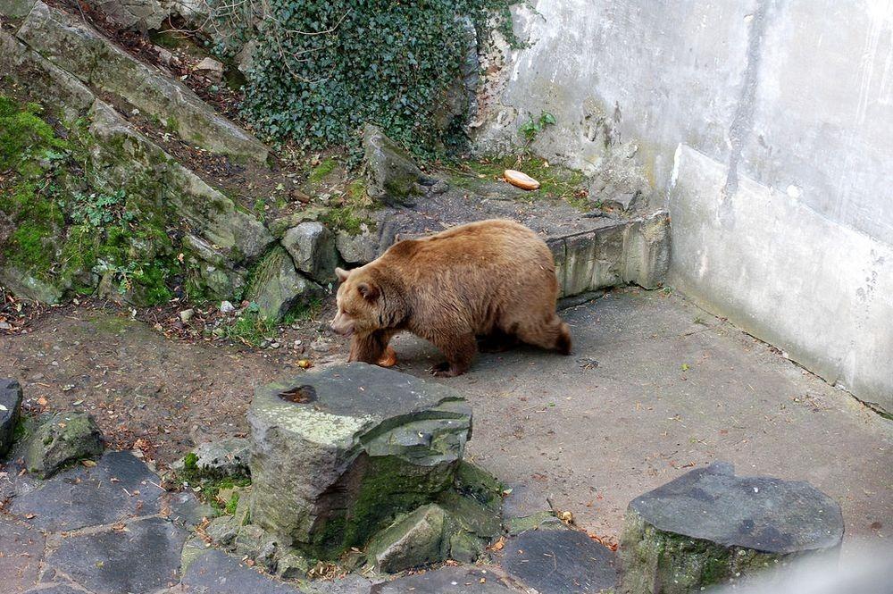 cesky-krumlov-castle-bears-3