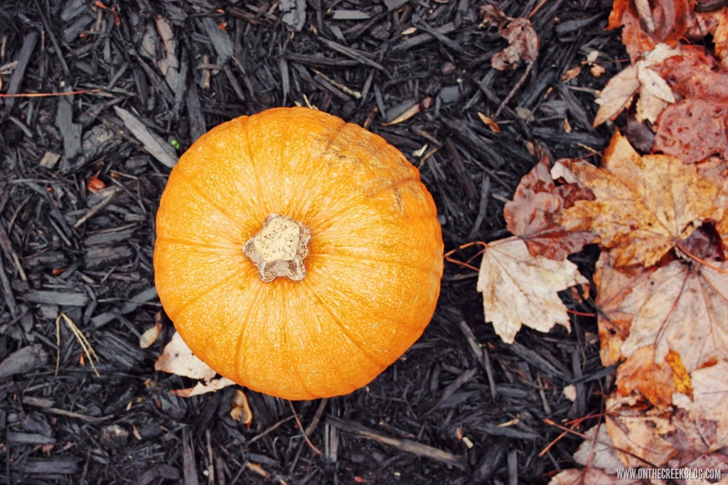 [pumpkin21%5B10%5D]