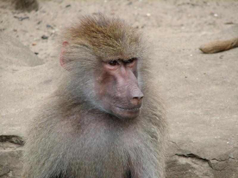 Warszawskie zoo - img_6252.jpg