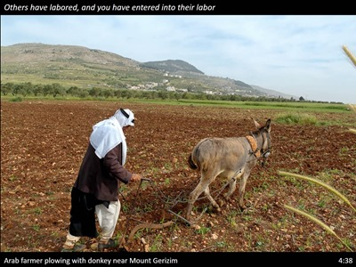 farmer-plowing-donkey-mt-gerizim