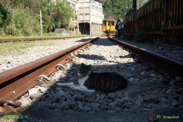 菁桐站,猫遇上火车