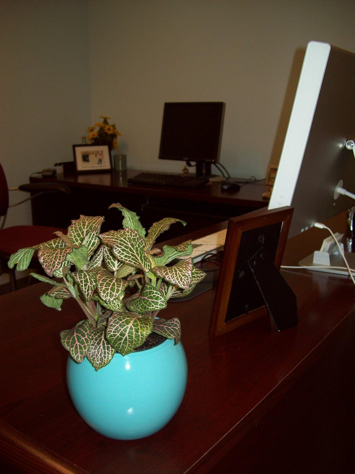 My Workspace - 000_0011.JPG