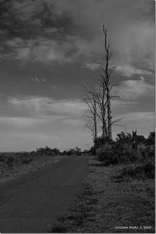 Nature in Rietvlei Nature Reserve