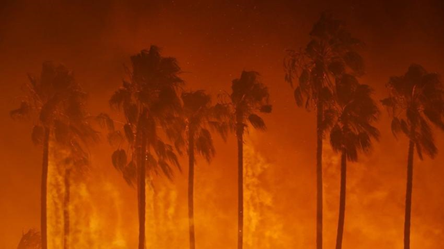 Palms are consumed in the Thomas fire in Ventura, California, 5 December 2017 Photo: Marcus Yam / Los Angeles Times