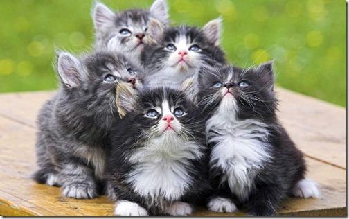 22 fotos de gats (17)