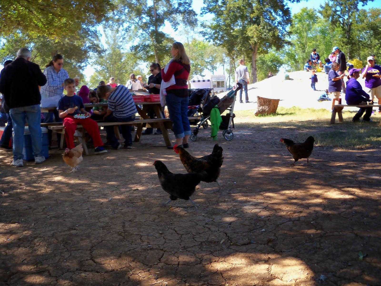 Blessington Farms - 116_5140.JPG