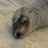 galapagos - Galapagos_FB-50.jpg