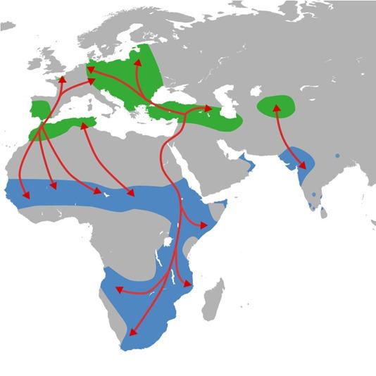 3-rotta migratoria