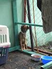 Casa Lupita (Animal Clinic on La Libertad Street)