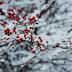 18 січня в Україні обіцяють до 27 градусів морозу: якою буде погода на Полтавщині