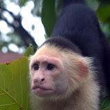 2011-10-28 Bay Islands, Honduras
