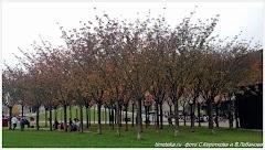 Амстердам осенью