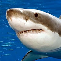 who is Shark Katharine contact information