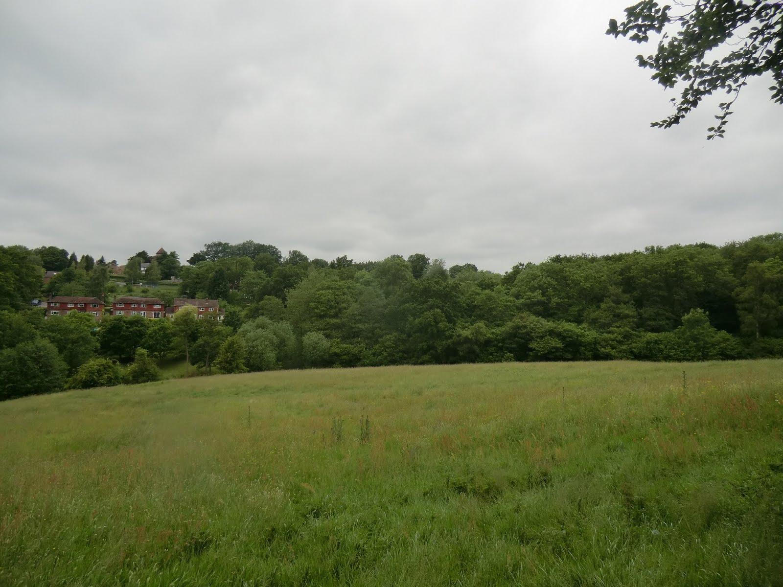 CIMG8588 Brookhurst Field, Bidborough
