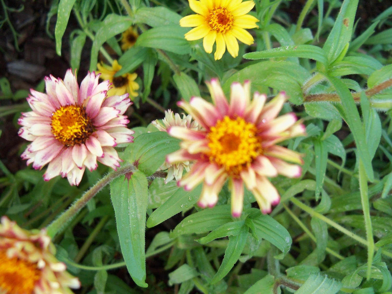 Gardening 2010, Part Three - 101_3981.JPG