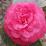 Ambre Dorschner (luna119)'s profile photo