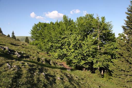 Stromy na Koniarkach