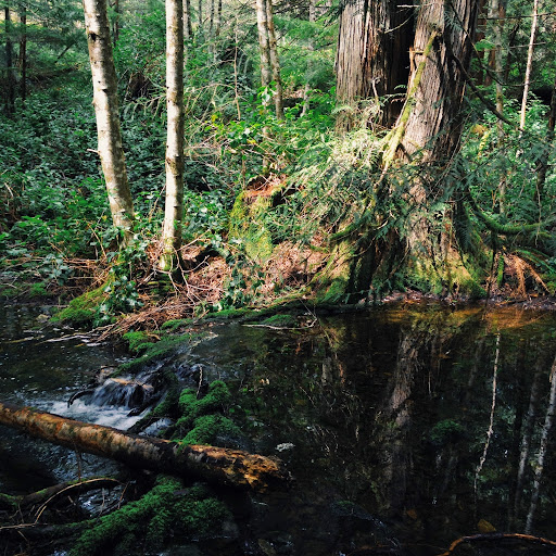 Water over root. To Peden Lake and Beyond: A Photoadventure