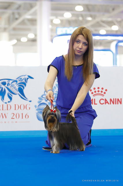World Dog Show-2016 6783