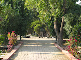 The college gardens