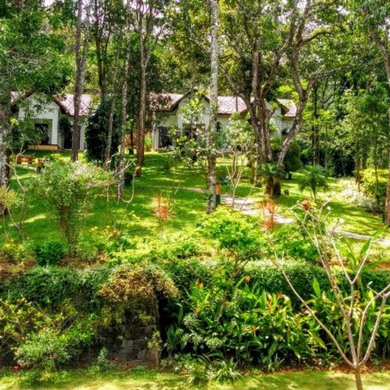 Monsoon Holidays In Kerala: Niraamaya Cardamom Club: Slice Of Heaven In Thekkady