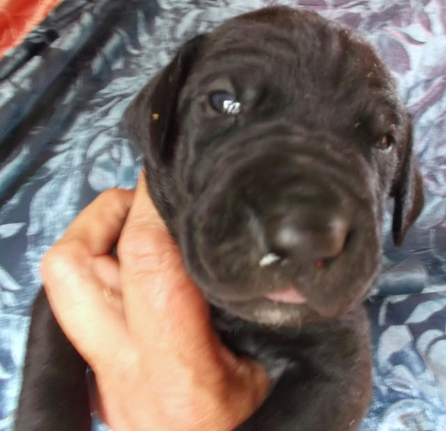 available black male #3